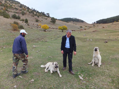 Özcan Yildirim, center, with a shepherd and sheep dogs in the high-altitude meadows above Kosor, photo by Roxanne Darrow