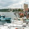 Chasing Hamsi in Sinop